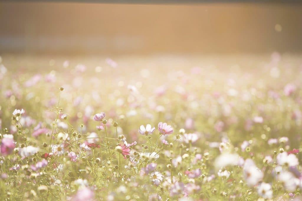 Se soigner naturellement pendant la saison des pollens