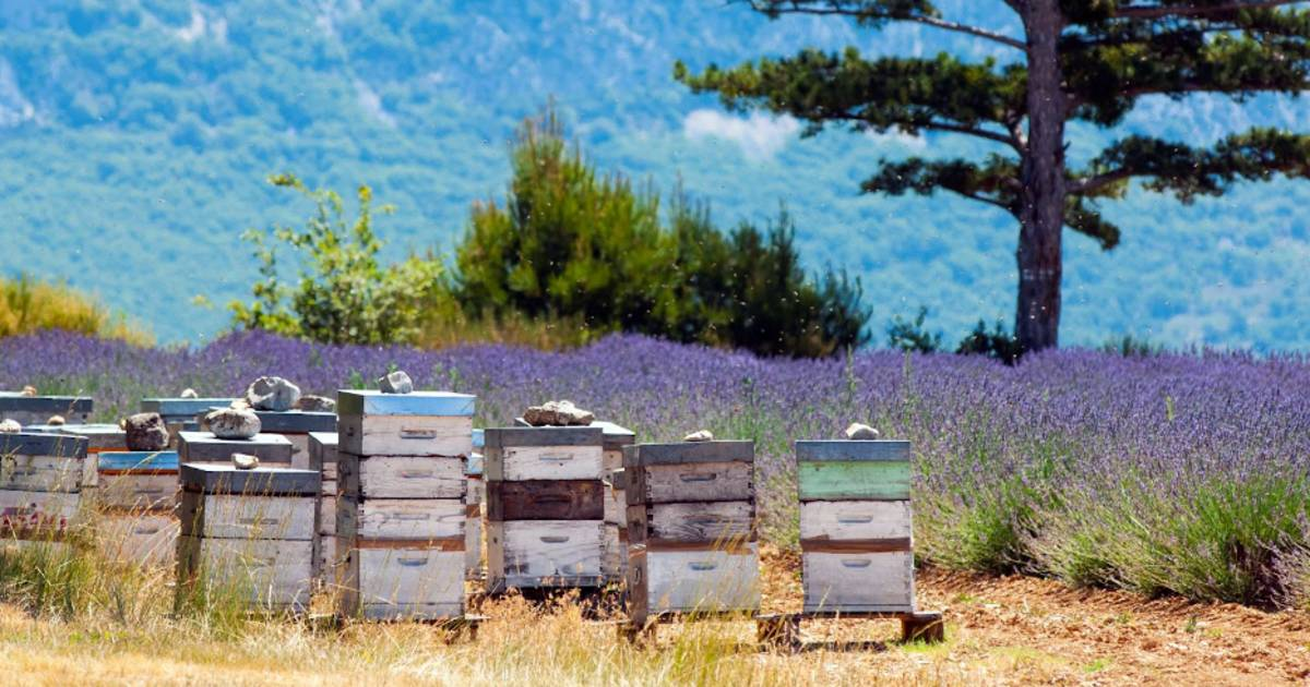 ruche, apiculture, abeilles, miel