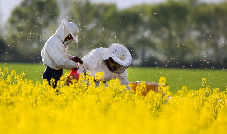 apiculture, abeilles, ruche