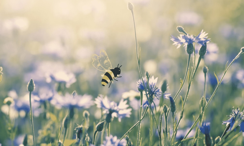 abeille printemps